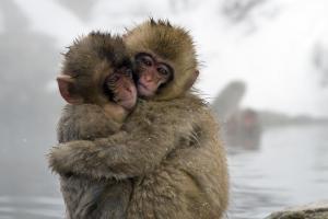 redeye-animal-photos-stunning-one-life-nat-geo-011