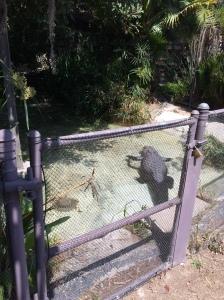 Reggie the Alligator