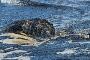 Refugio_Oil_Spill_in_Santa_Barbara